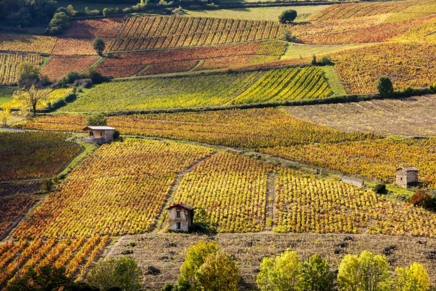 Les vignes près de Beaujeu (© PHB.cz  - Fotolia))