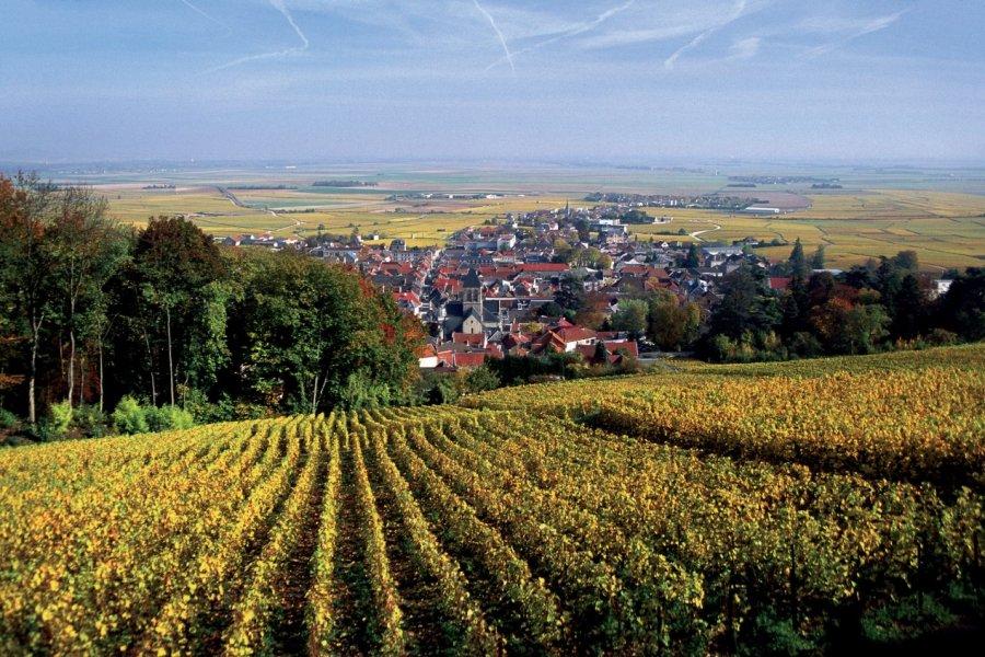 Vignoble de Champagne (© AM stock nature))