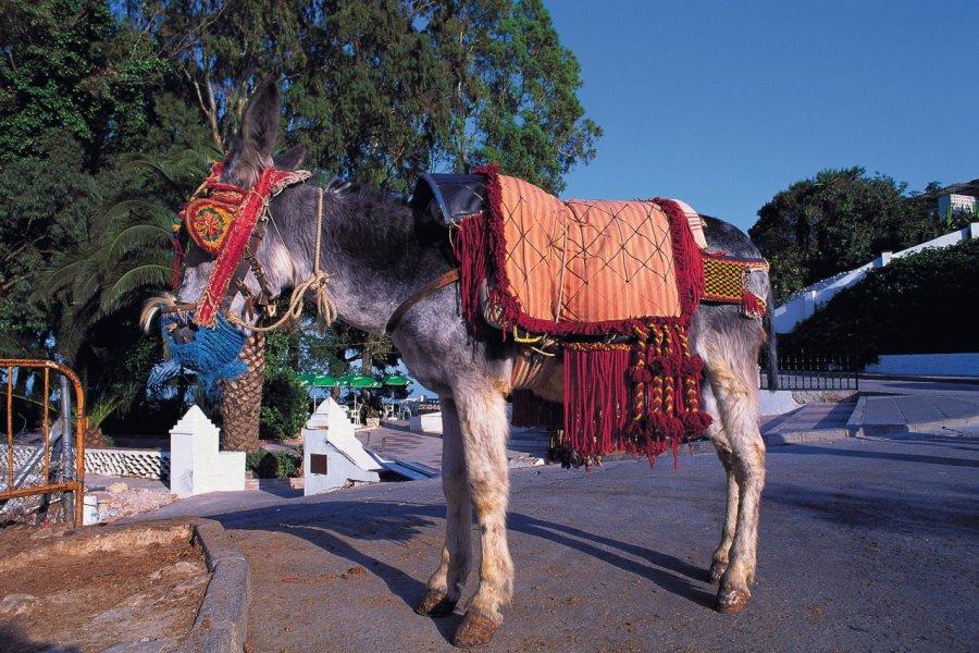 L'âne permet de visiter Mijas à son rythme. (© Author's Image))