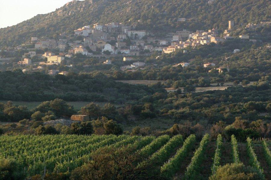 Vignoble du Clos Culombu à Lumio (© Clos Culombu))