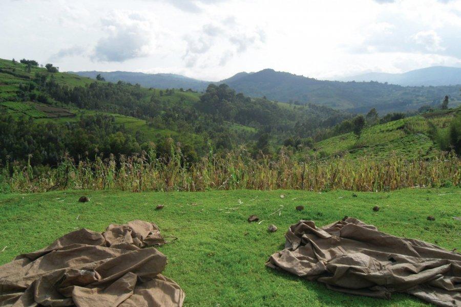 Paysage du Mugamba. (© Julia GASQUET))