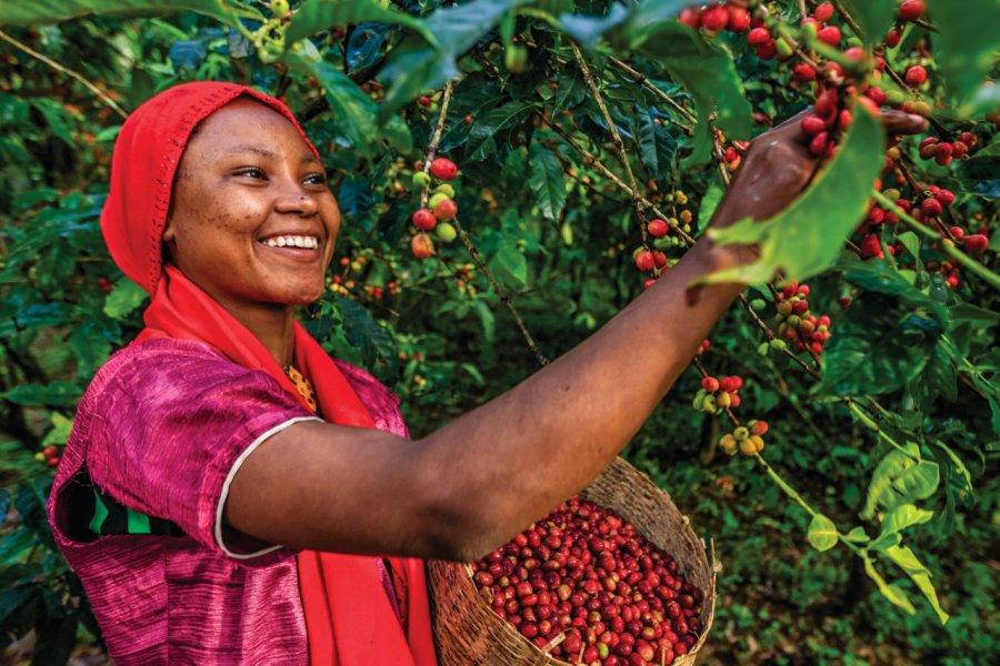 L'Ethiopie est le septième producteur mondial de café. (© Bartosz Hadyniak))