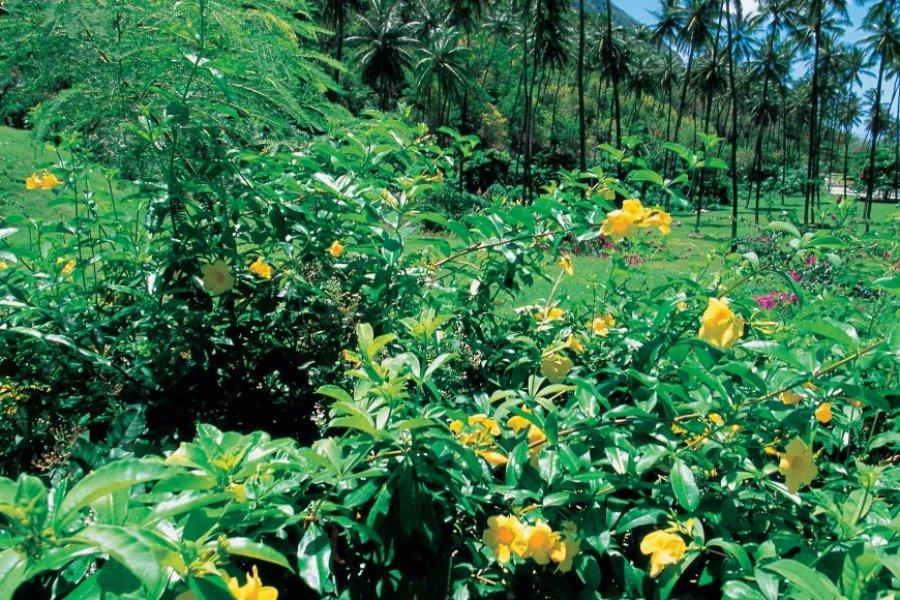 Petit-Piton est entouré d'une flore très diversifiée. (© Tom Pepeira  - Iconotec))