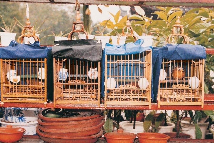 Au marché aux oiseaux de Canton. (© Miguel POIRIER))