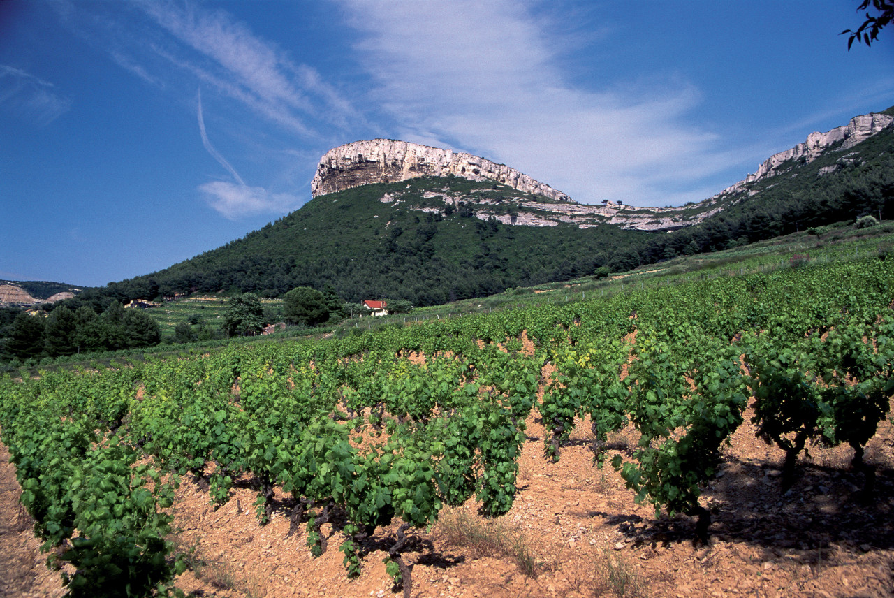 Vignoble de Provence. (© AM stock nature))