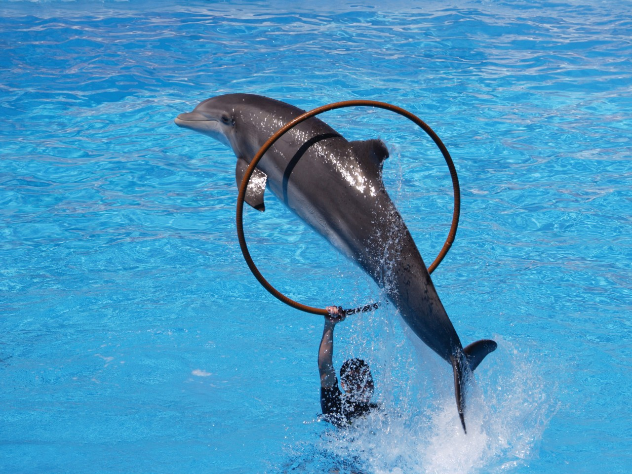 Jeux avec les dauphins au Loro Parque. (© Juice Images))
