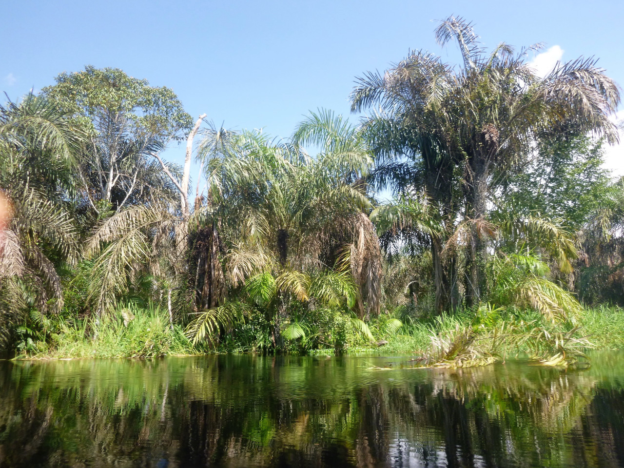 La rivière Ibenga entre Enyellé et Moyoko. (© Clarisse LHEZ))