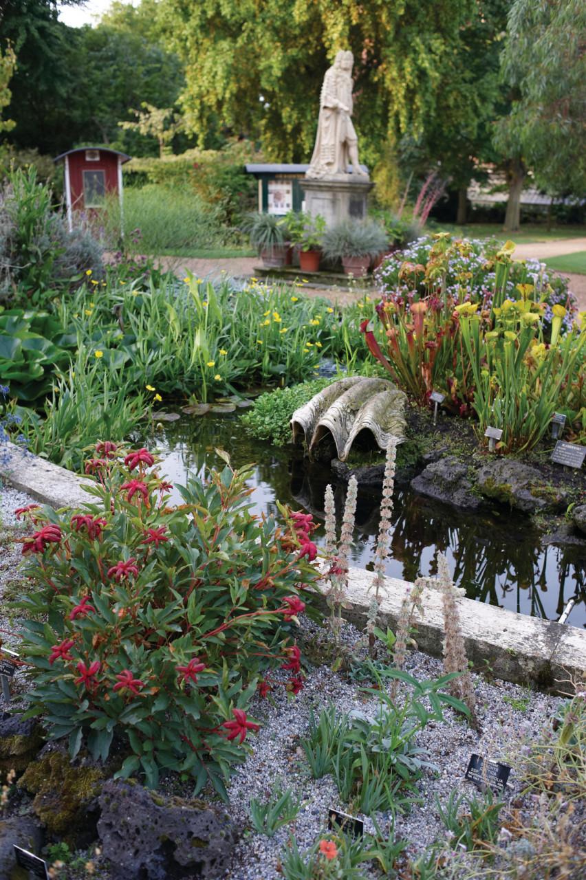 Jardin botanique. (© CHELSEA PHYSIC GARDEN))