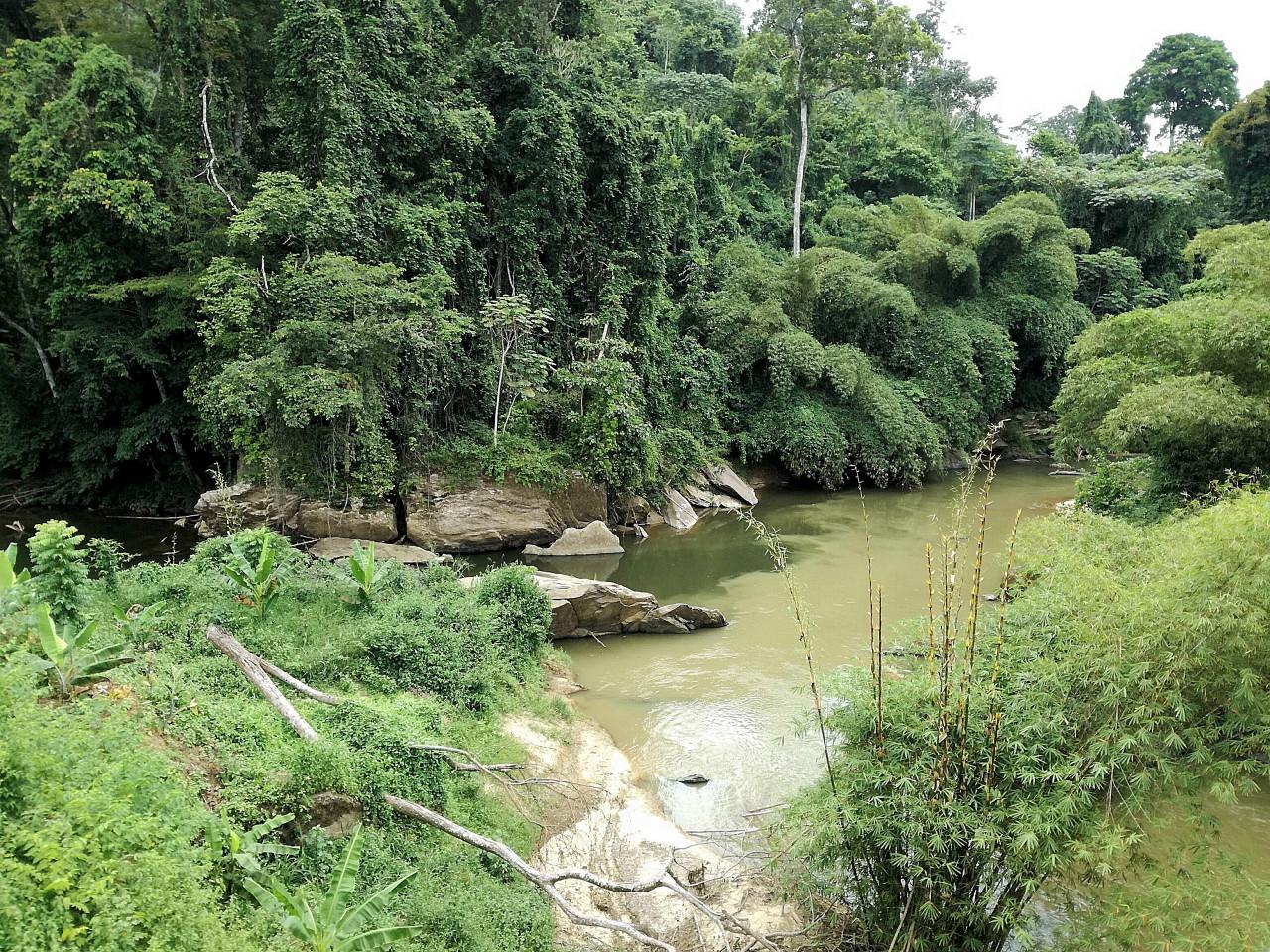 La forêt du Mayombe. (© Benoît Lognoné))