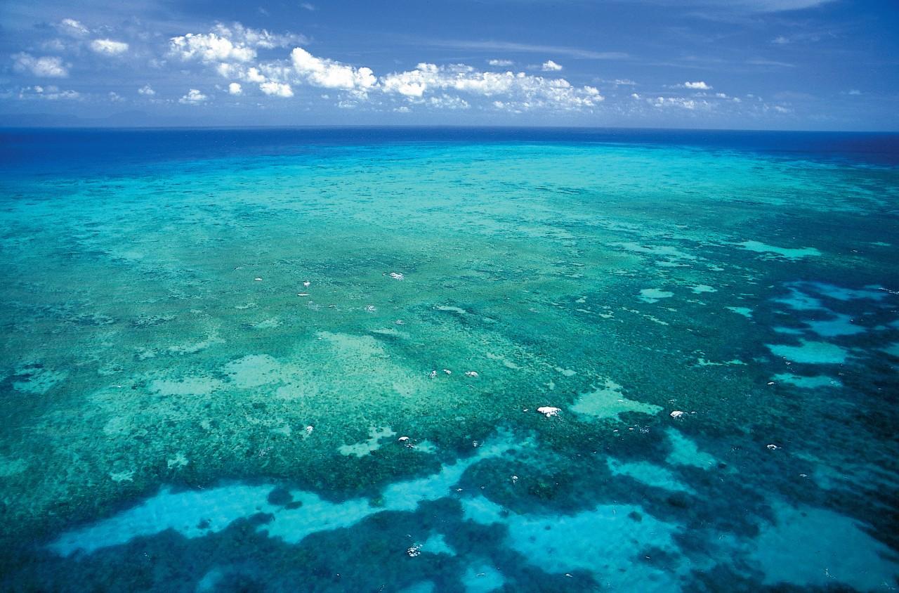 Great Reef Reef.