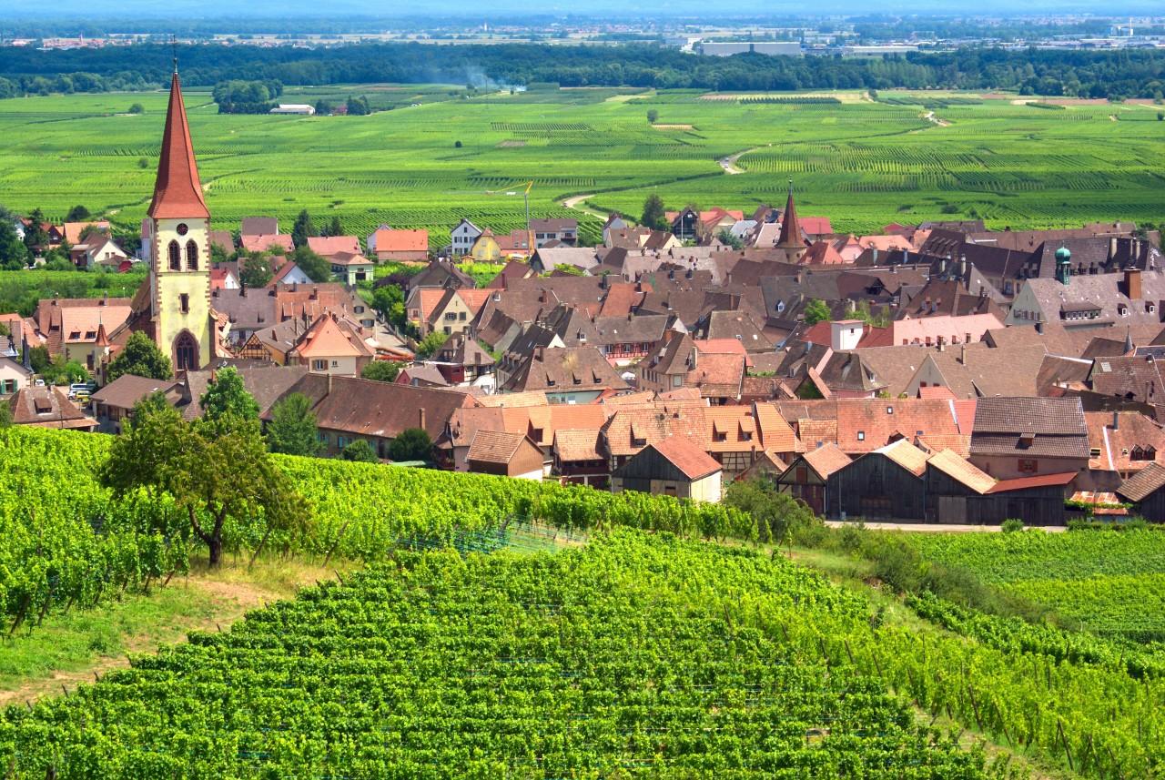 Vignoble à Ammerschwihr. (© Mellow10 - Fotolia))