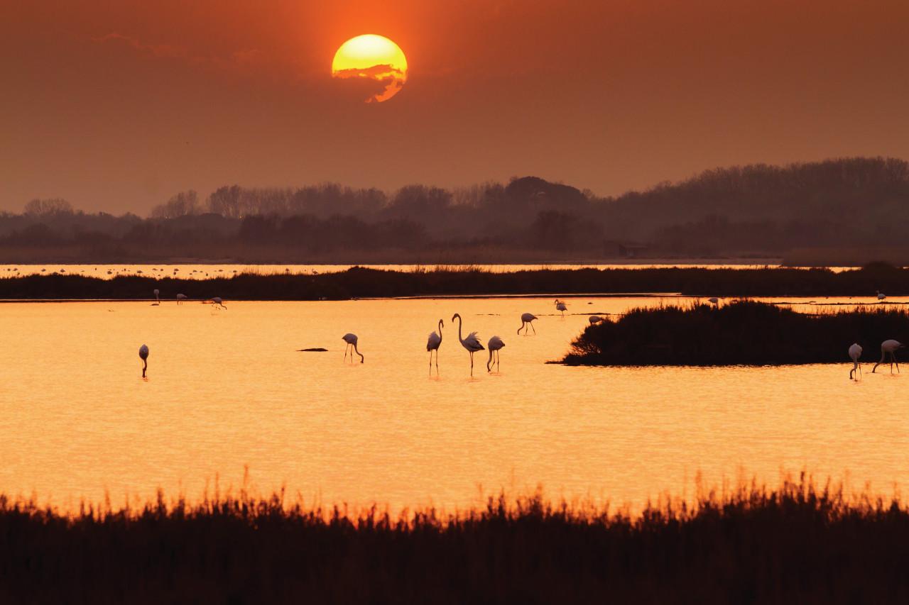 Coucher de soleil sur un étang dans les environs de La Grande-Motte. (© Frédéric de Bailliencourt))