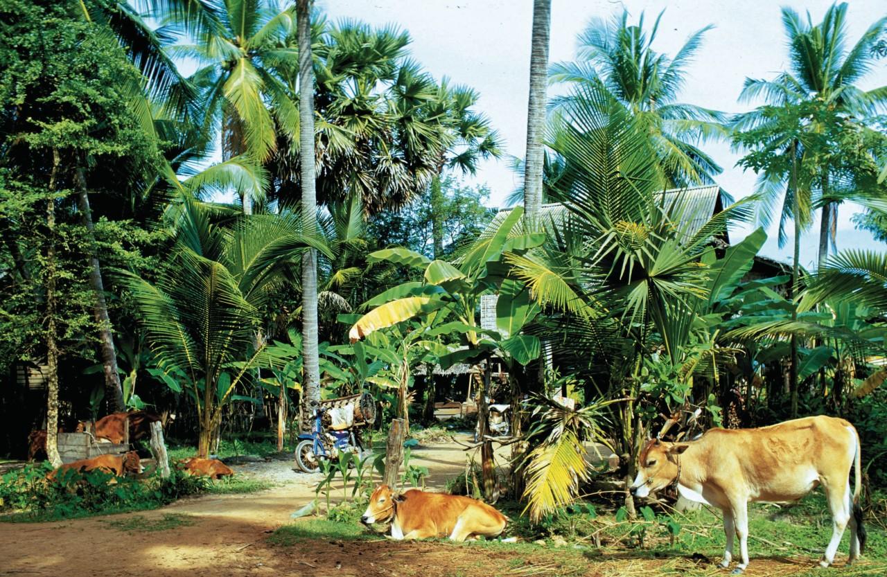 Paysage de Siem Reap. (© Alamer - Iconotec))
