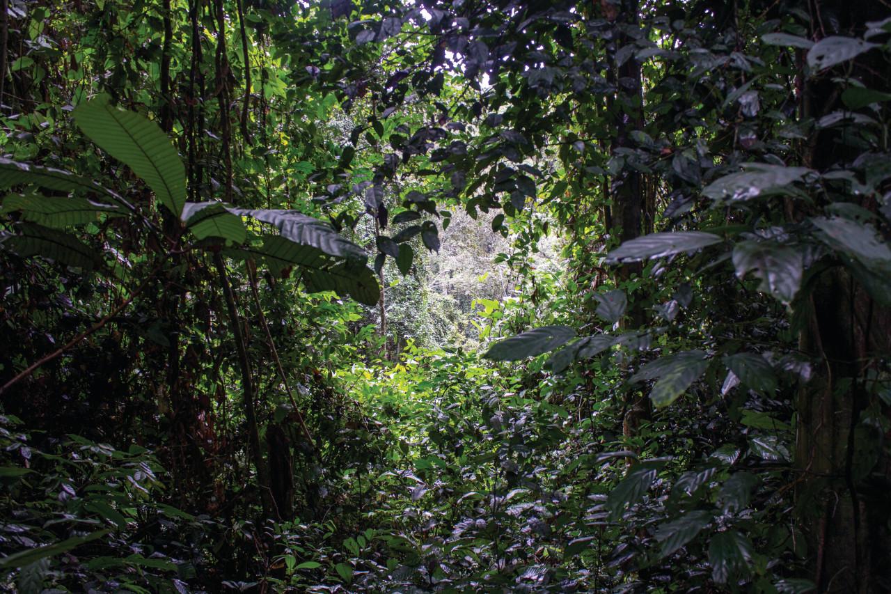 La draisine au milieu de la végétation. (© Florence Danner))