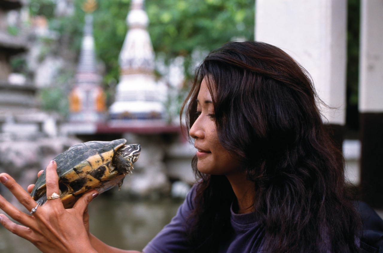 Wat Prayum - Sanctuaire aux tortues. (© Mickael David - Author's Image))