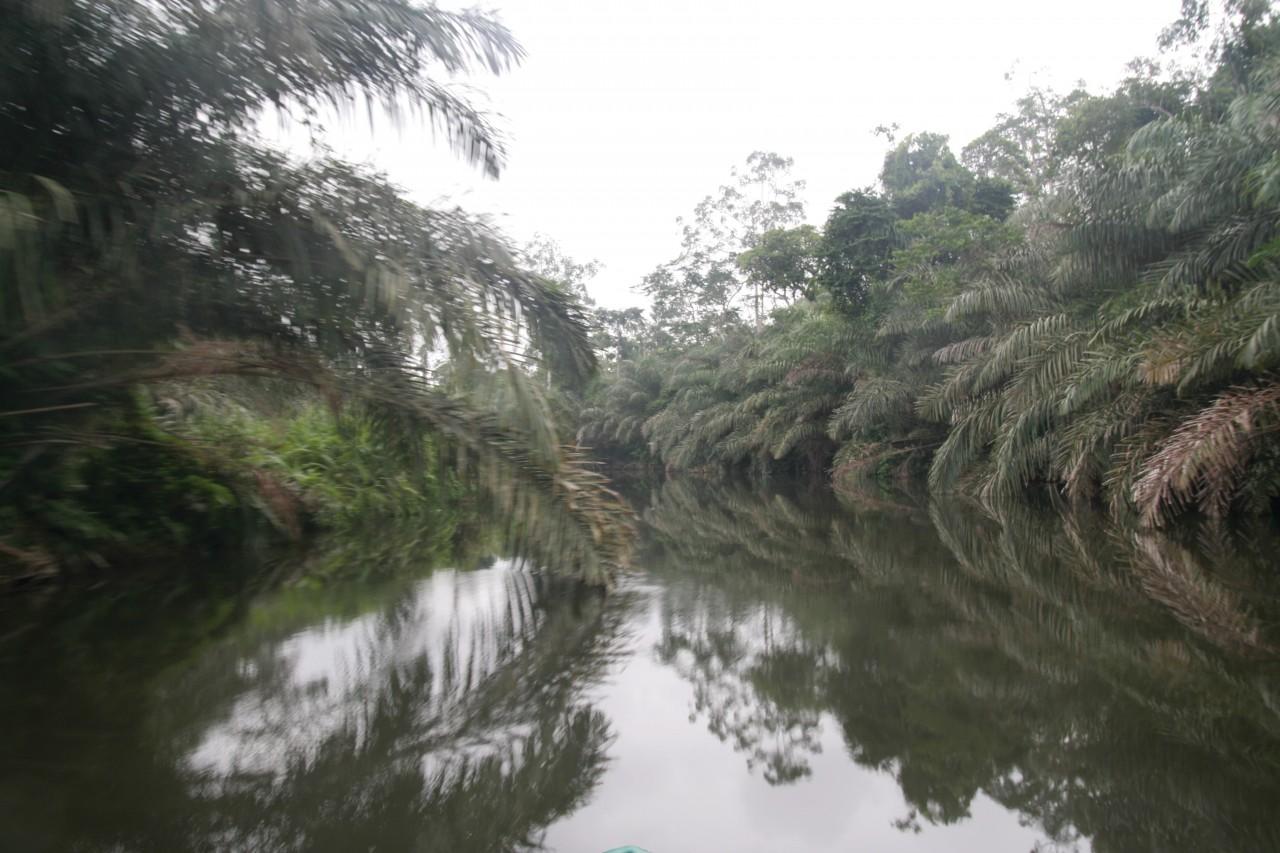 Parc national de Conkouati-Douli, remontée de la rivière Ngongo. (© Stéphane DAMANT))