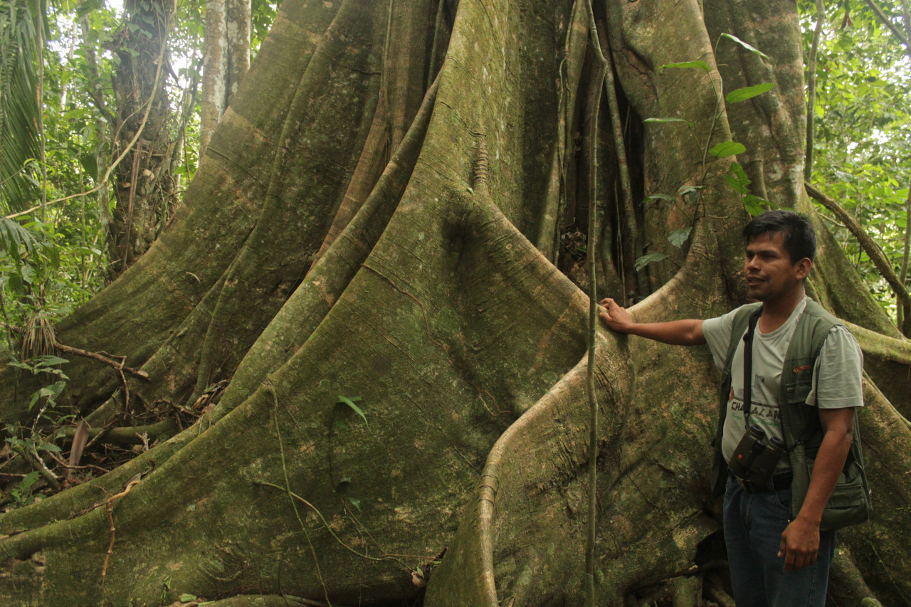 Dans le parc de Madidi, les communautés locales bénéficient de l'essor du tourisme écologique.