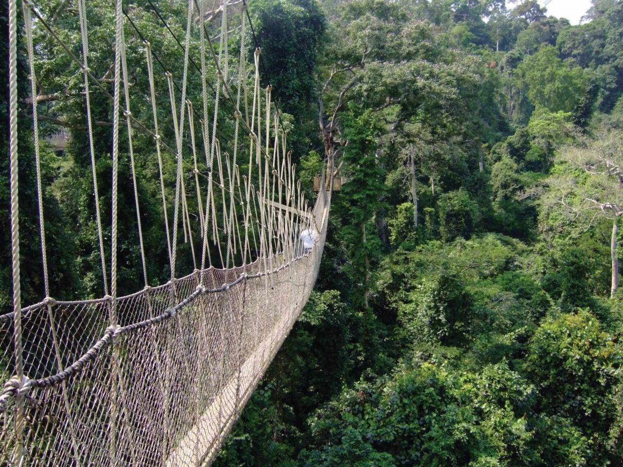 Parcours du Canopy au Kakum National Park. (© bytestrolch - iStockphoto.com))