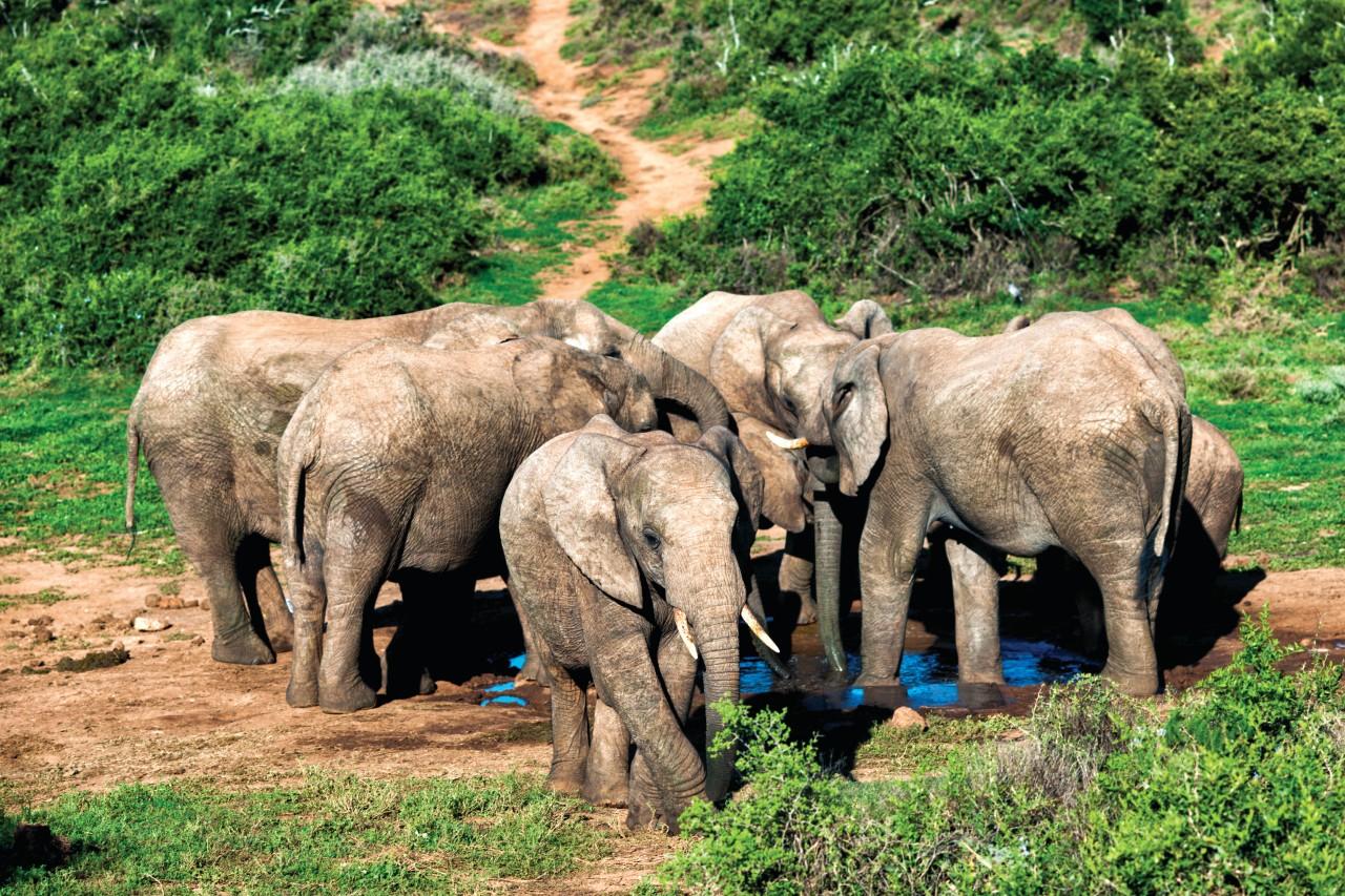 National Park of Addo Elephants.