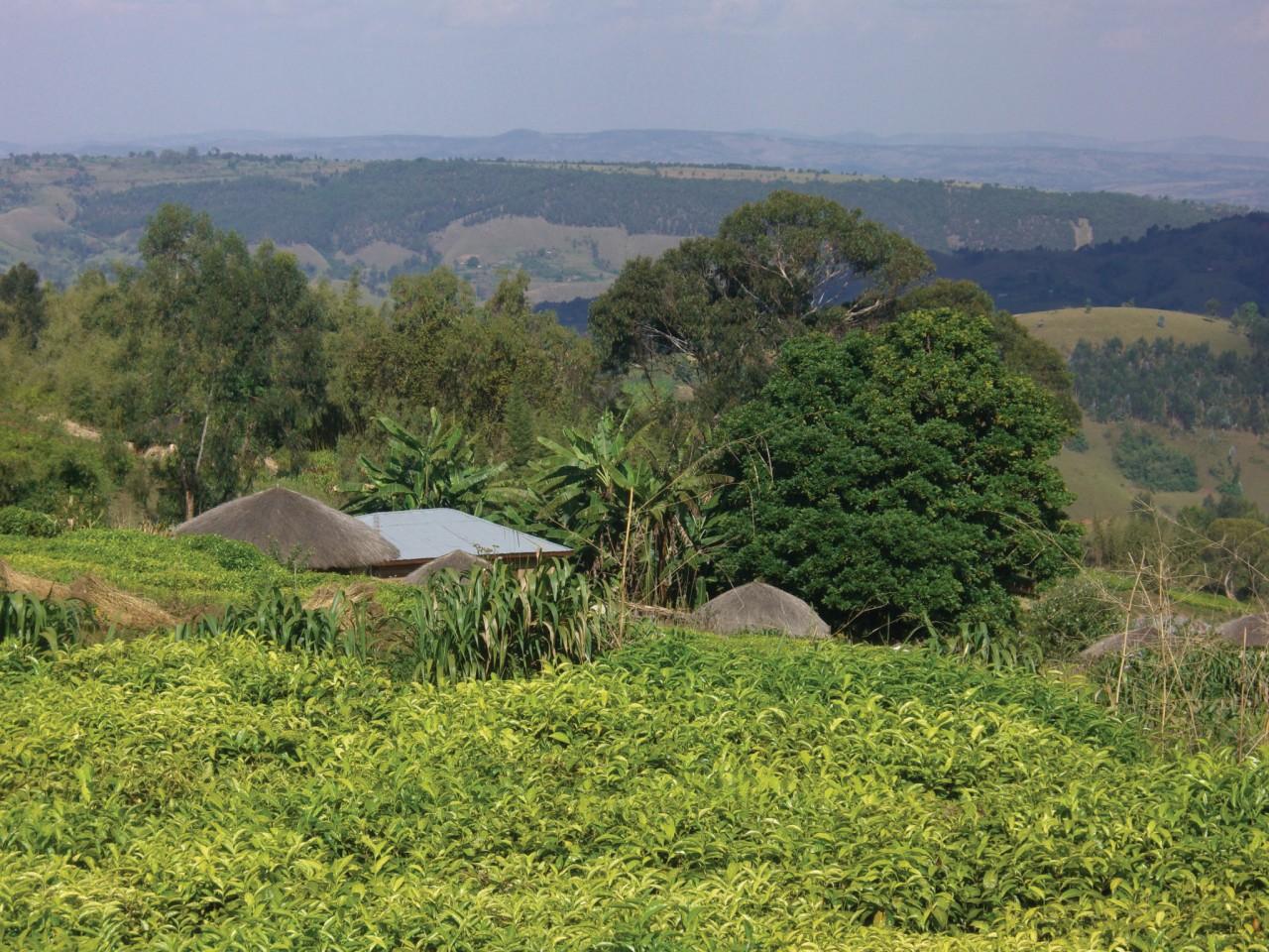 Un rugo dans le Mugamba. (© Christine DESLAURIER))
