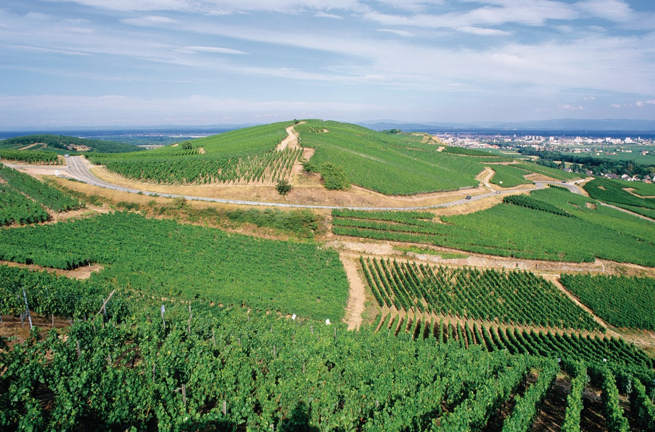 Vignobles de Turckheim (© Irène ALASTRUEY - Author's Image))
