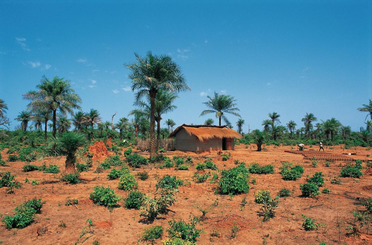 Paysage rural de Casamance. (© S.Nicolas - Iconotec))