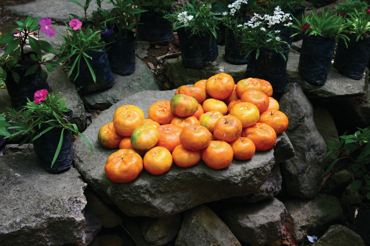 Oranges d'El Valle, province de Coclé. (© Batman2000 - iStockphoto))