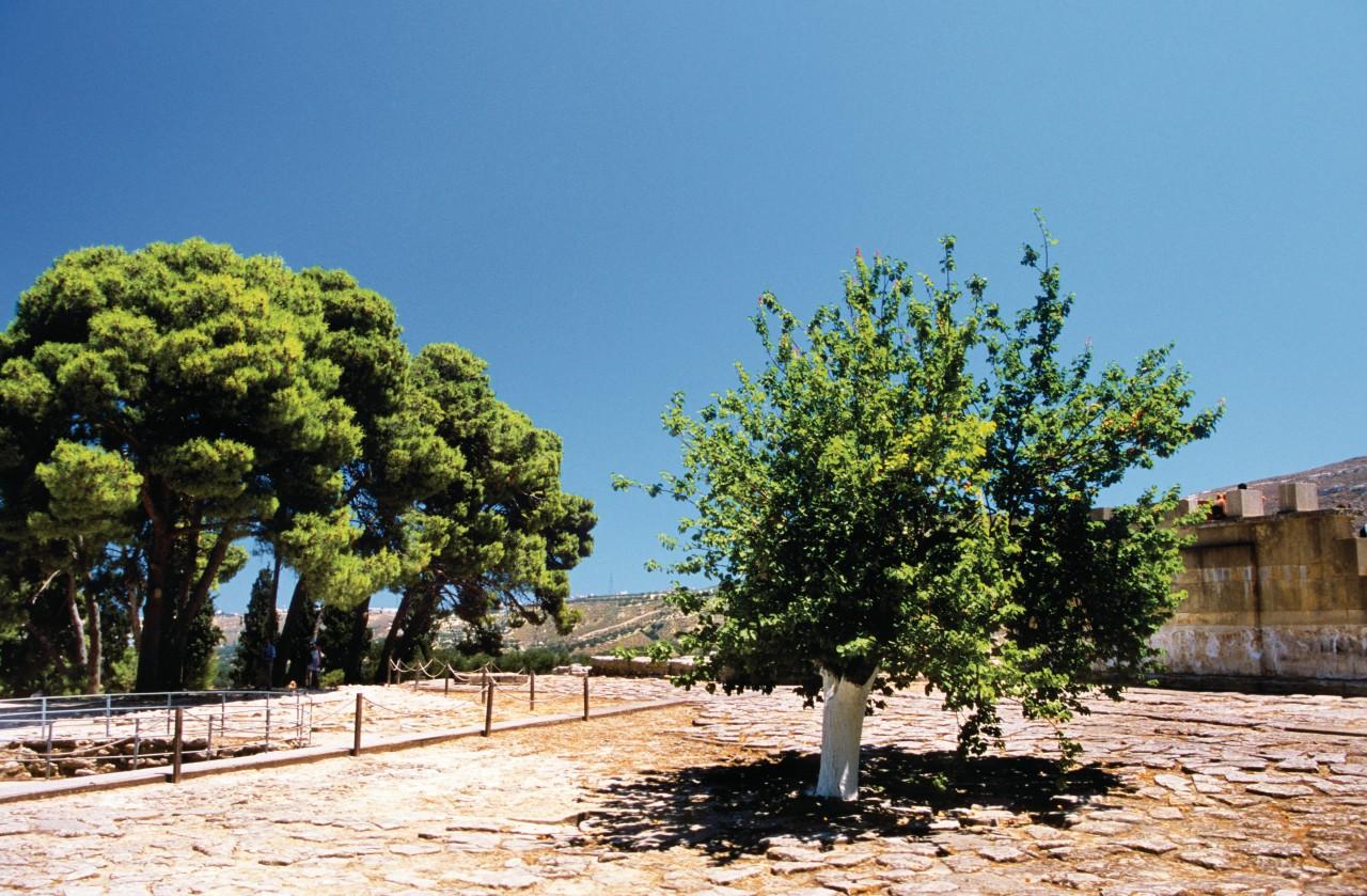 Cour pavée de l'entrée du site minoen de Cnossos. (© Author's Image))