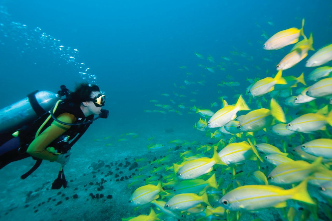 Plongée sous-marine aux Seychelles.