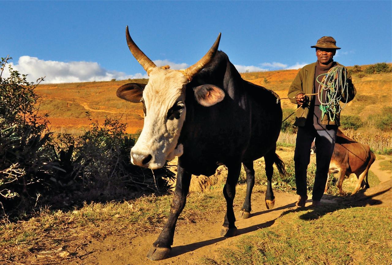 Ambatomanga, petit village situé à 50 km à l'est d'Antananarivo.