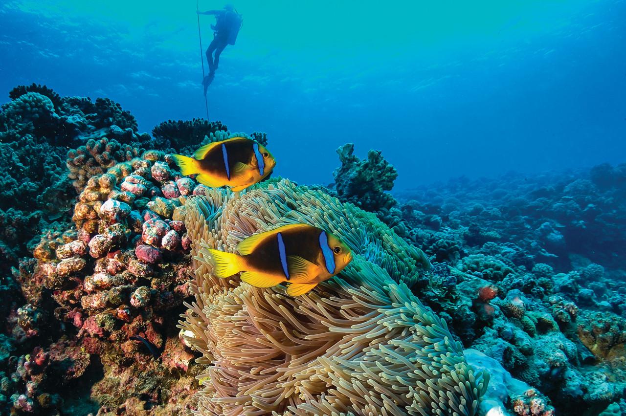 Plongée à Tahiti. (© Global_Pics - iStockphoto.com))