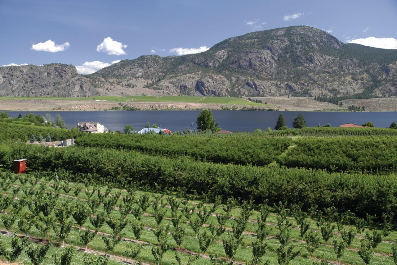 Arbres fruitiers dans la vallée de l'Okanagan.