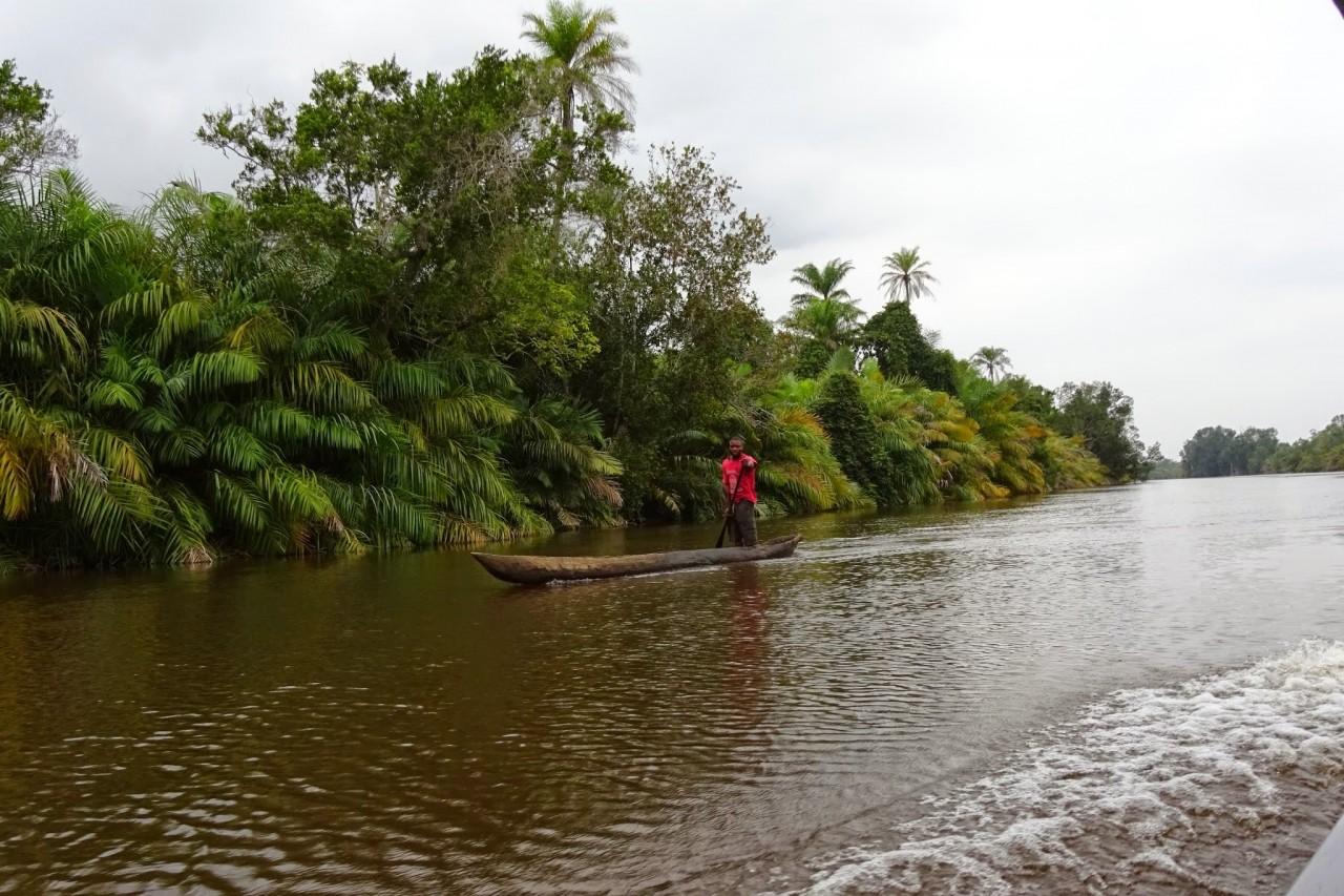 Parc marin des Mangroves (© Ph. Wyvekens))