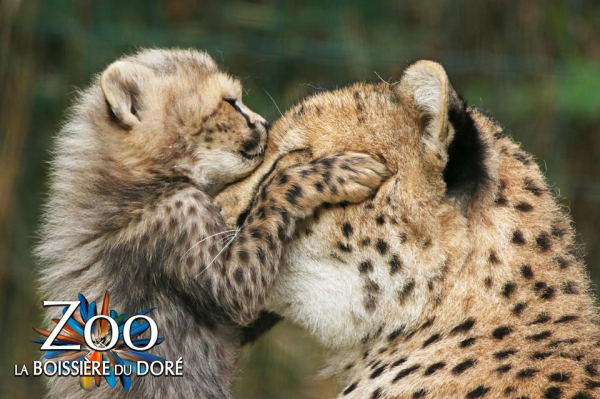 zoo boissiere