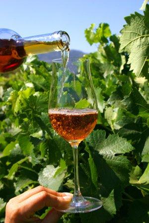 Vin - Setubal - ©SETÚBAL - OFFICE DU TOURISME MUNICIPAL