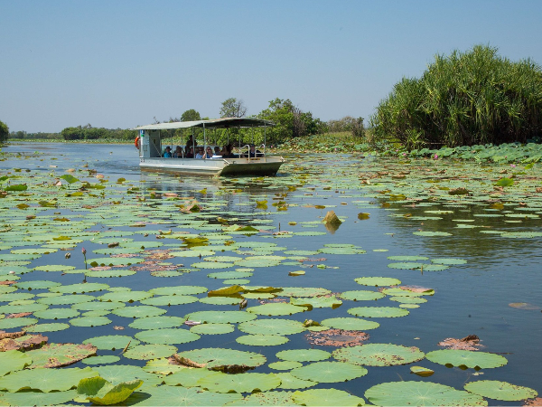 Nénuphars - ©Corroborree Billabong Wetland Cruises