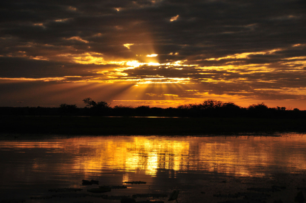salwater crocodile - ©CORROBOREE BILLABONG WETLAND CRUISES
