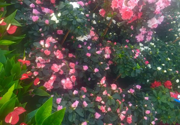 Jardinerie riera p pini re drive jardinerie venelles for Jardinerie par internet