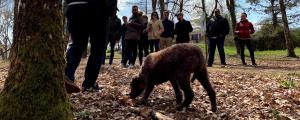 Partez à la chasse aux truffes