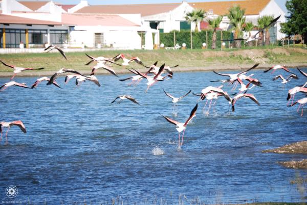 Observation oiseaux - ©HERDADE DA DIABRÓRIA