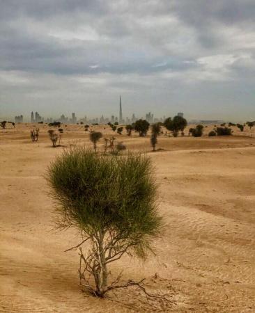 Le Désert de Dubai - ©JOSETTE GHAZAL - GUIDE FRANCOPHONE