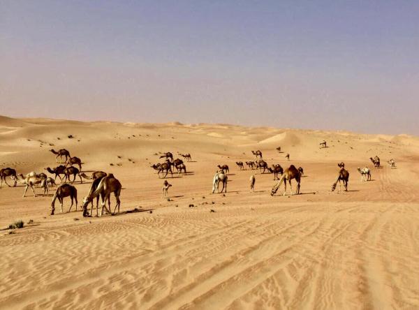 Dubai - ©JOSETTE GHAZAL - GUIDE FRANCOPHONE