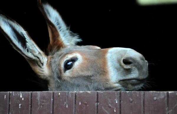 Histoires d'ânes - ©HISTOIRES D'ÂNES