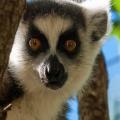 AGENCE DÉTOURS MADAGASCAR
