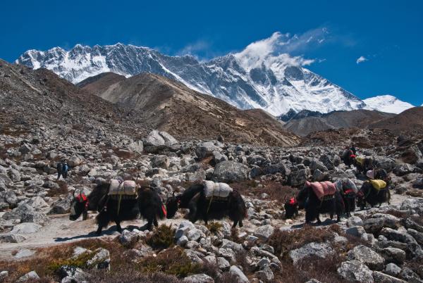 SATORI ADVENTURES Agence de voyage - Tours opérateurs Katmandou photo n° 382699 - ©SATORI ADVENTURES