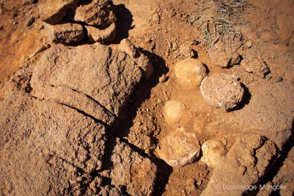 oeufs de dinosaures - ©ECOVOYAGE MONGOLIE