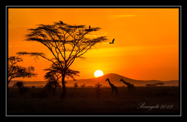 Paradies Safaris