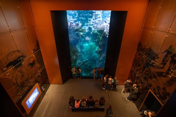 L'Océan du Futur - ©LA CITÉ DE LA MER