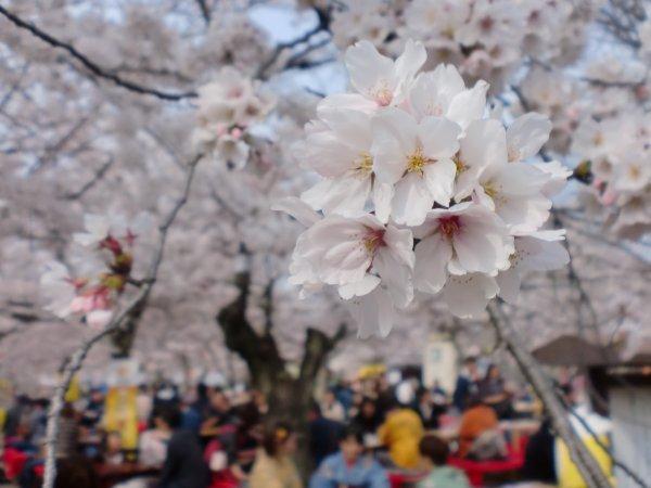 Le printemps - ©AU FIL DU JAPON