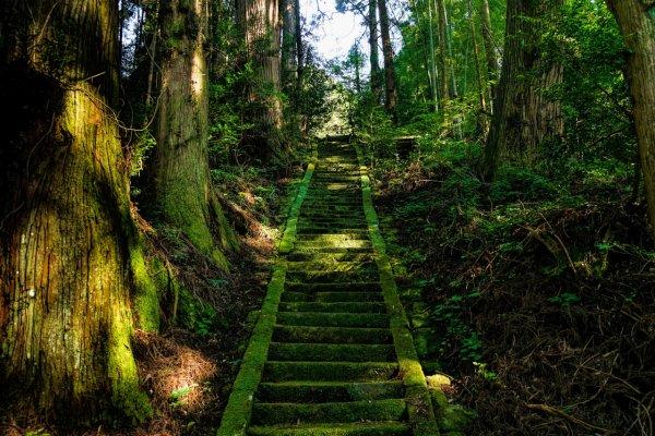 La forêt - ©AU FIL DU JAPON
